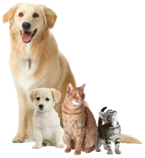 View Images Of Dogs And Cats Together Not Copyright