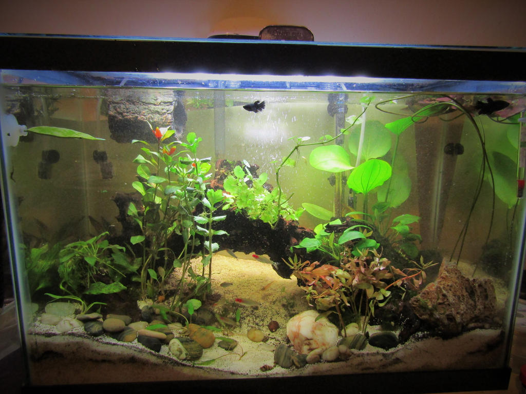 how to clean water before using in fish tank