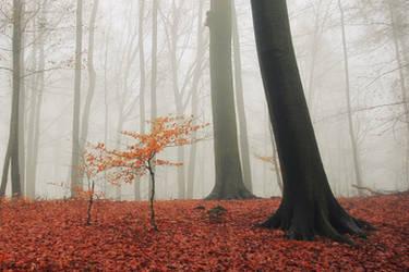 Small in fog