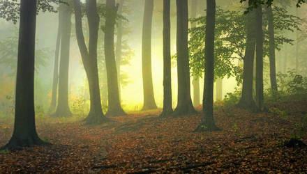 Autumn greatness