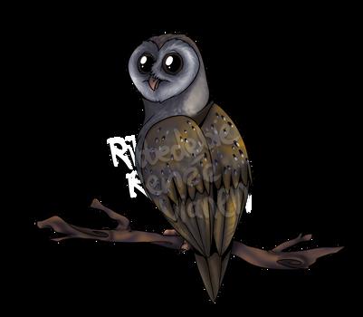 Barn owl by Ribbedebie