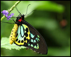 Butterfly by Andy-Stewart