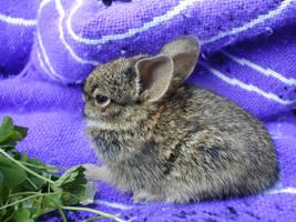 Lucky Bunny 1