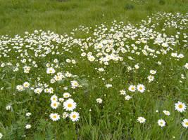 Flower Hillside 5 by DarkMaiden-Stock