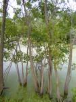 Swampy Pond 4