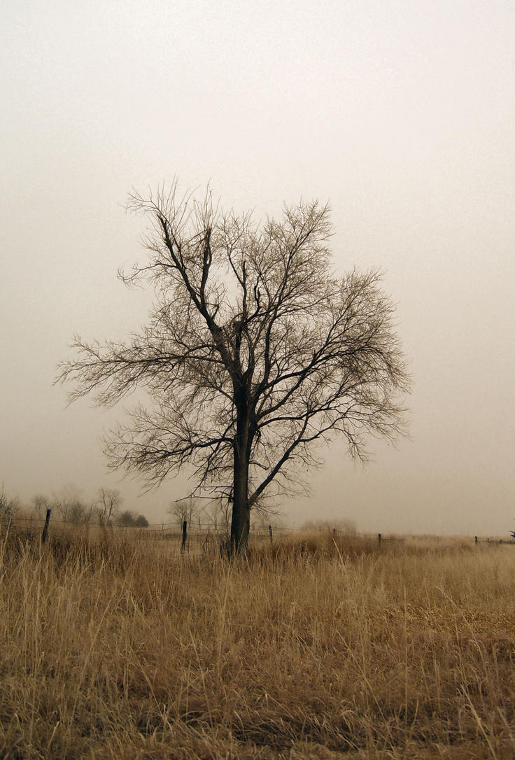 Lonely Tree by DarkMaiden-Stock