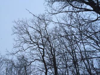 Bereft of Leaves by Mickeymcp