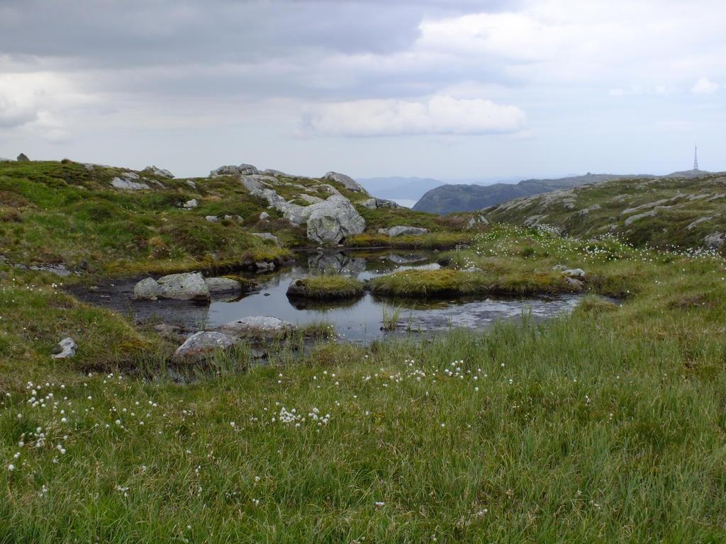 Mountain Pond I by dani221
