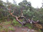 Wound tree