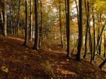 Autumn Forest VI