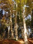 Autumn Forest XXII