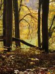 Autumn Forest XXIV