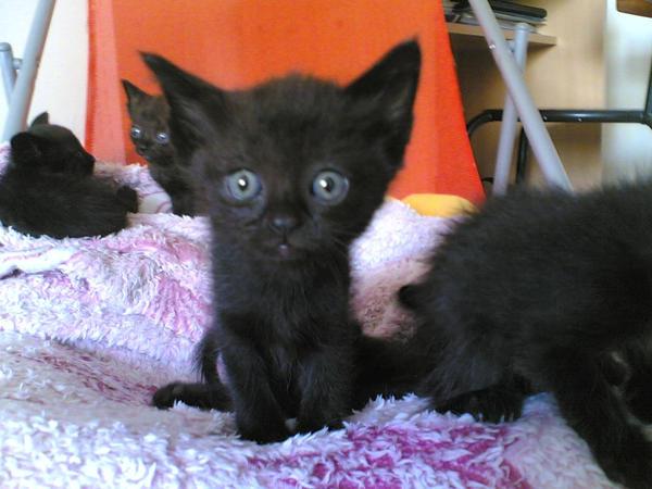 Gatos Hermosos + Info
