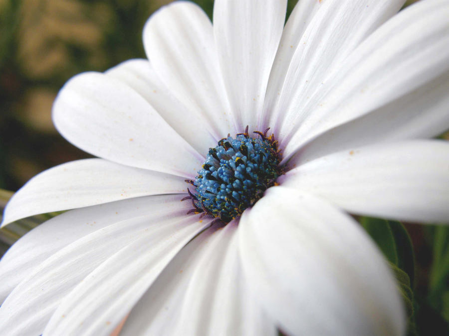white flower by lorna on deviantart, Beautiful flower