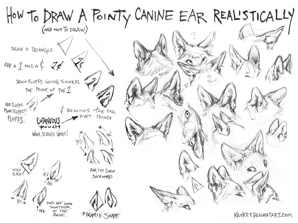 Line Art Drawing Tutorial : How to draw canine ears tutorial by kenket on deviantart