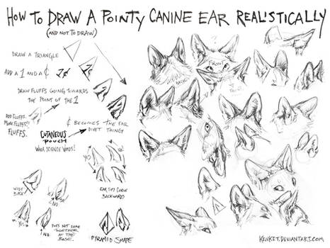 How to Draw Canine Ears Tutorial #1