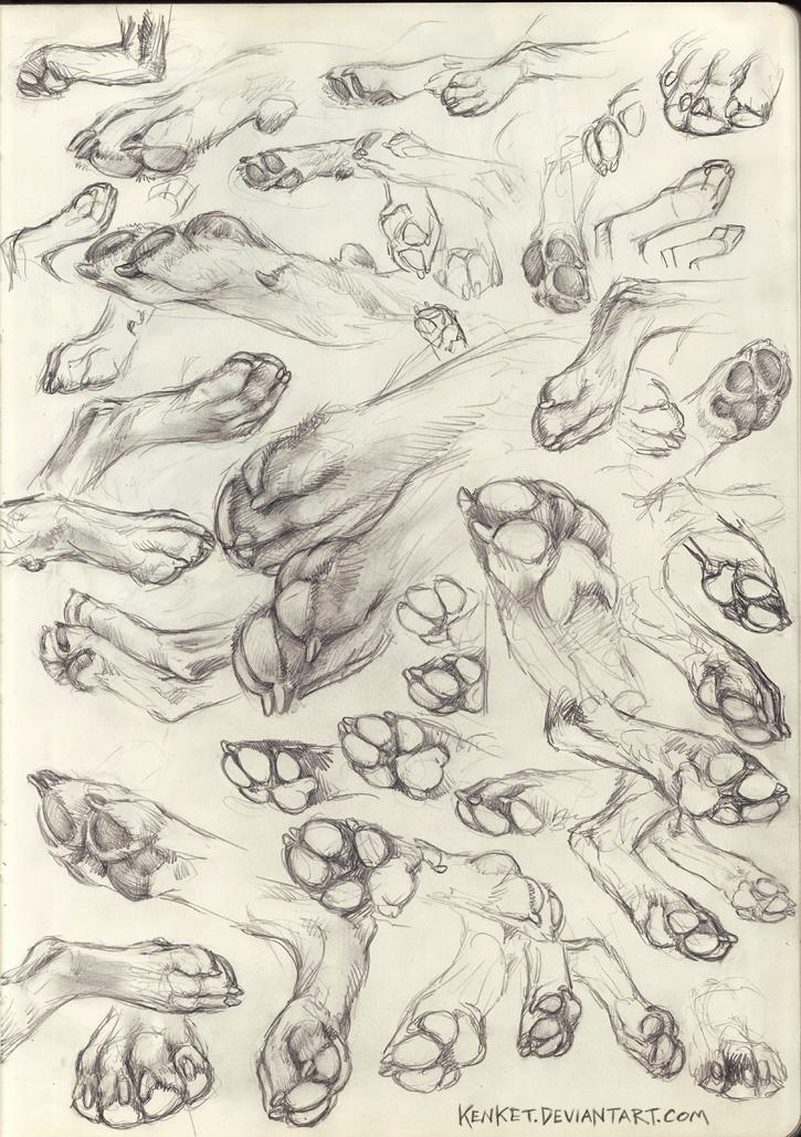 Paw Studies by kenket on DeviantArt