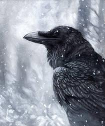 Winter Raven by kenket