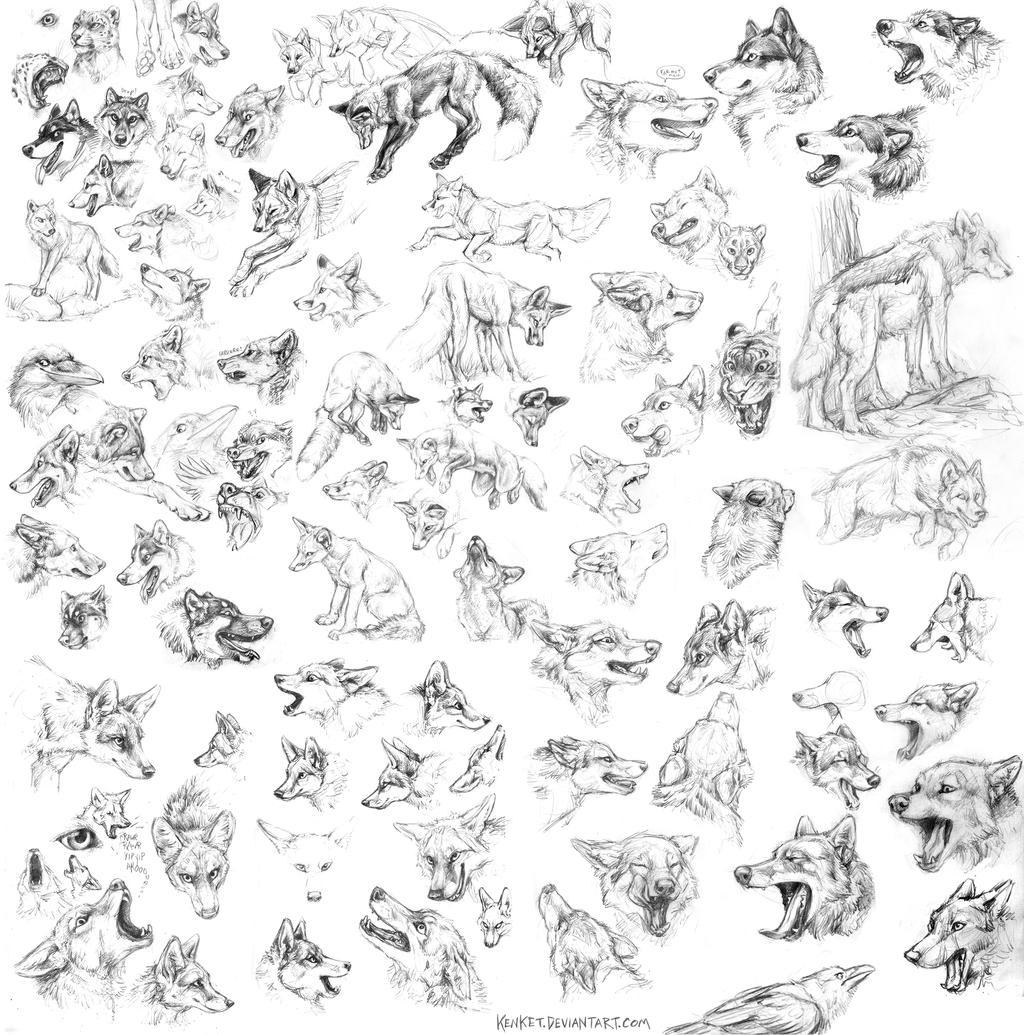 how to draw animal heads