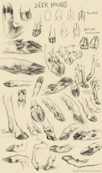 Deer Hoof Studies