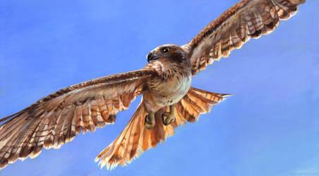 Hawk by kenket