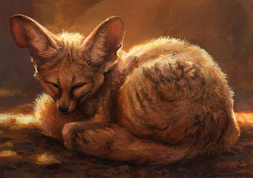 Fennec by kenket