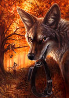New Coyote by kenket
