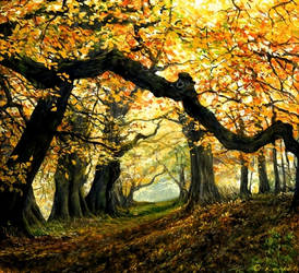 Forest of Fae