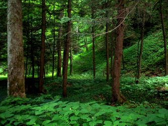 Forest Stock 06 by Solira-Stock