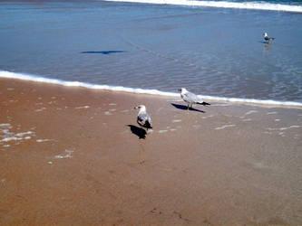 Beach Stock 07 by Solira-Stock