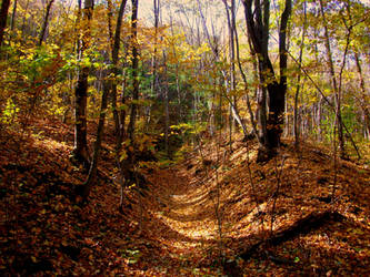 Fall Forest Stock 01 by Solira-Stock