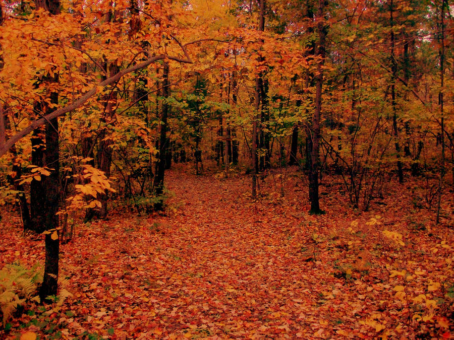 Fall Forest Stock 02 by Solira-Stock