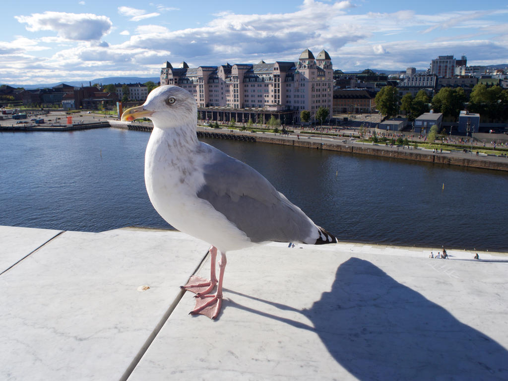 Seagull by Holly-Rosse