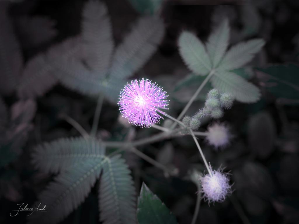 Flower pom poms by Holly-Rosse