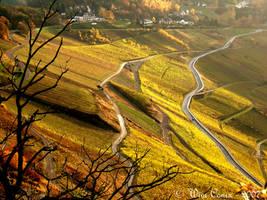 Golden winefields... by Wimley