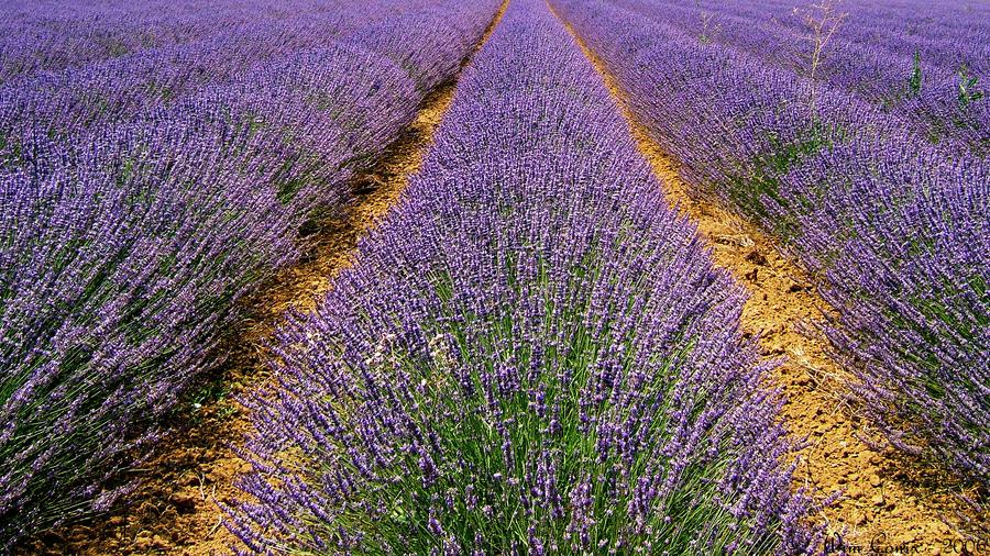 La Provence... by Wimley