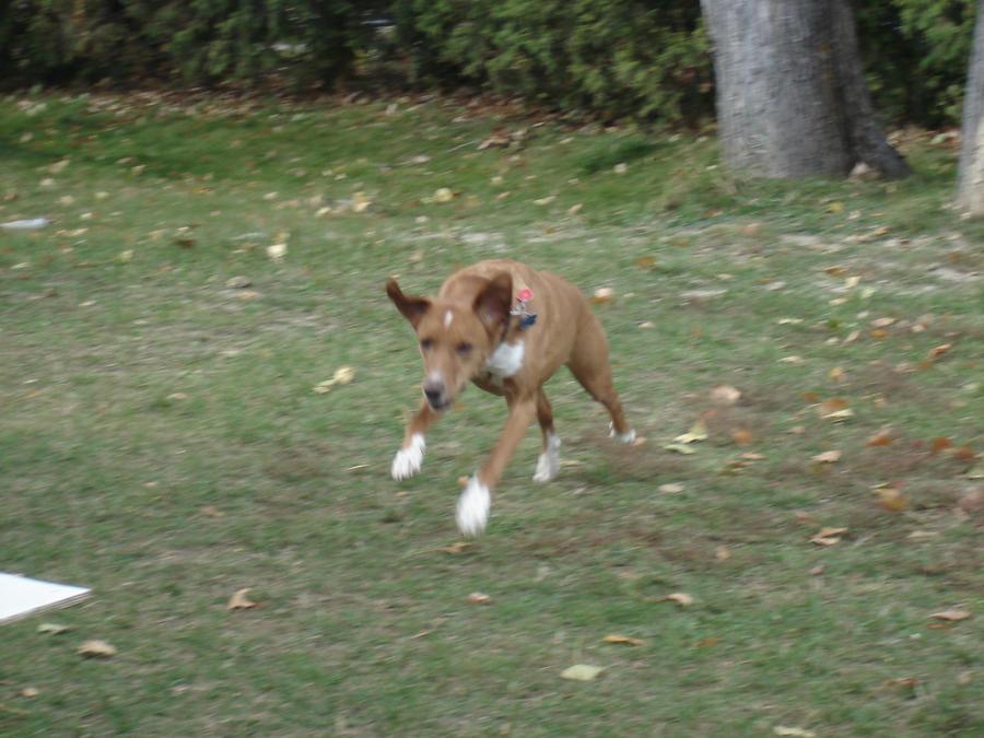 Super dog by poochy228