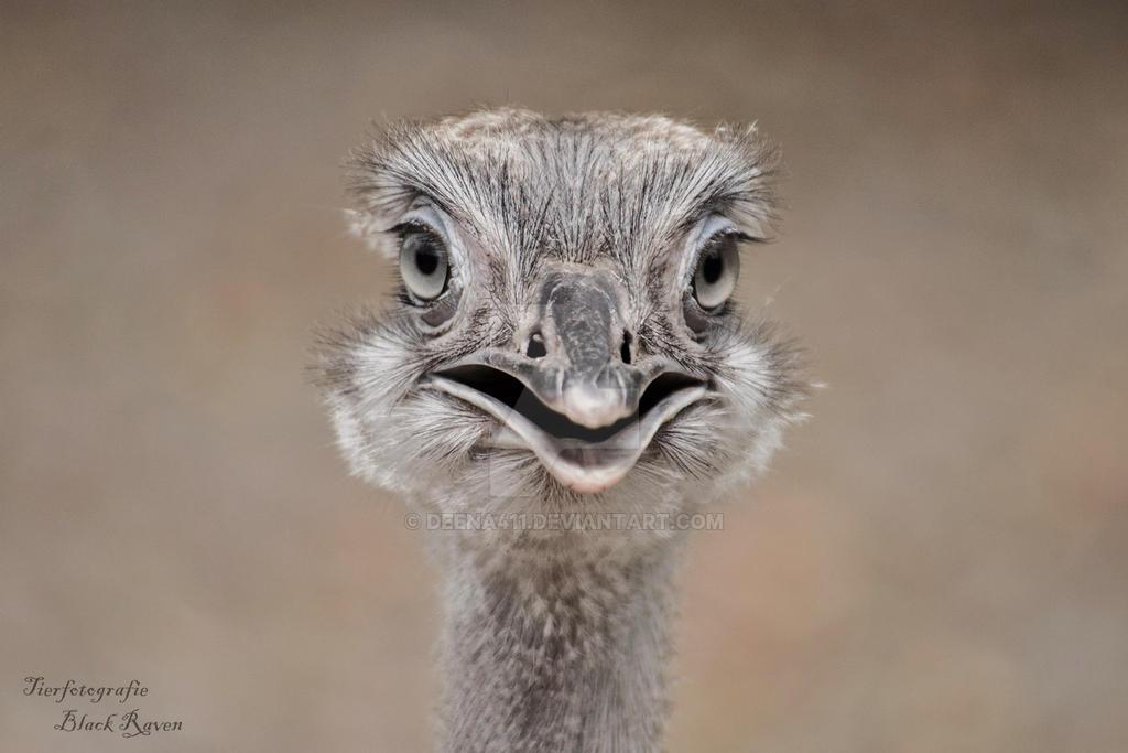 Emu by Deena411
