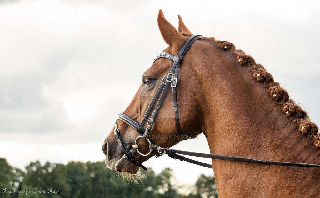 Beauty of a Horse by Deena411