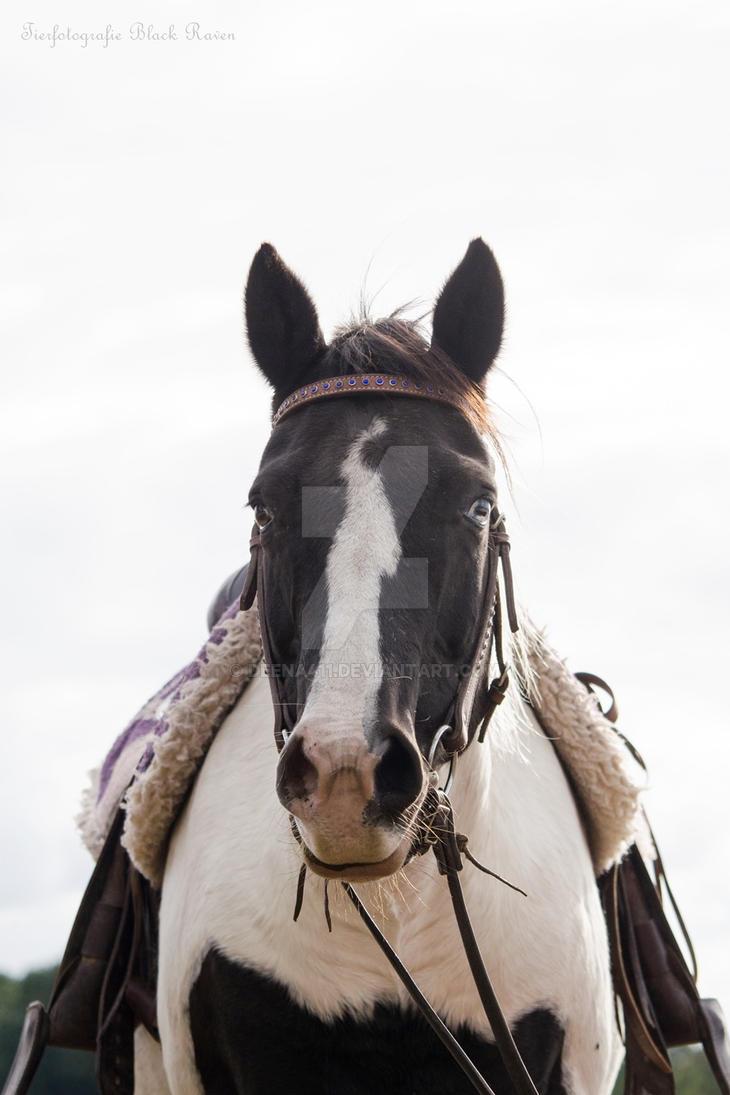 Western Horse by Deena411