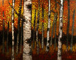 Birch Trees in Fall Forest