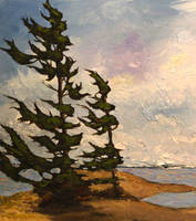 Weathered Pines (Detail)