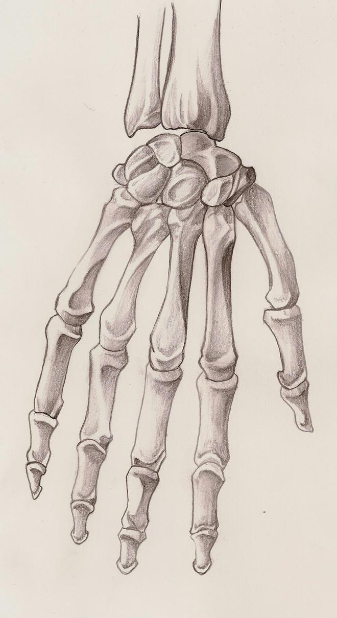 skeleton hand by gacktxx on DeviantArt