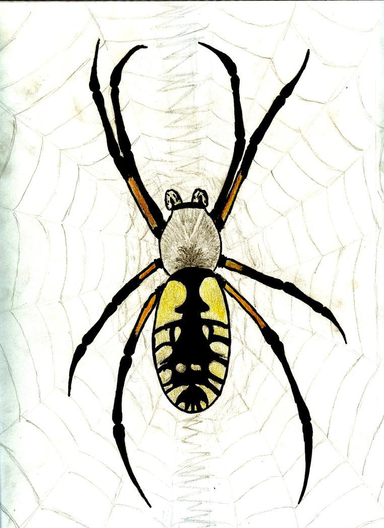 spirder sketch by lesleylithium on deviantart