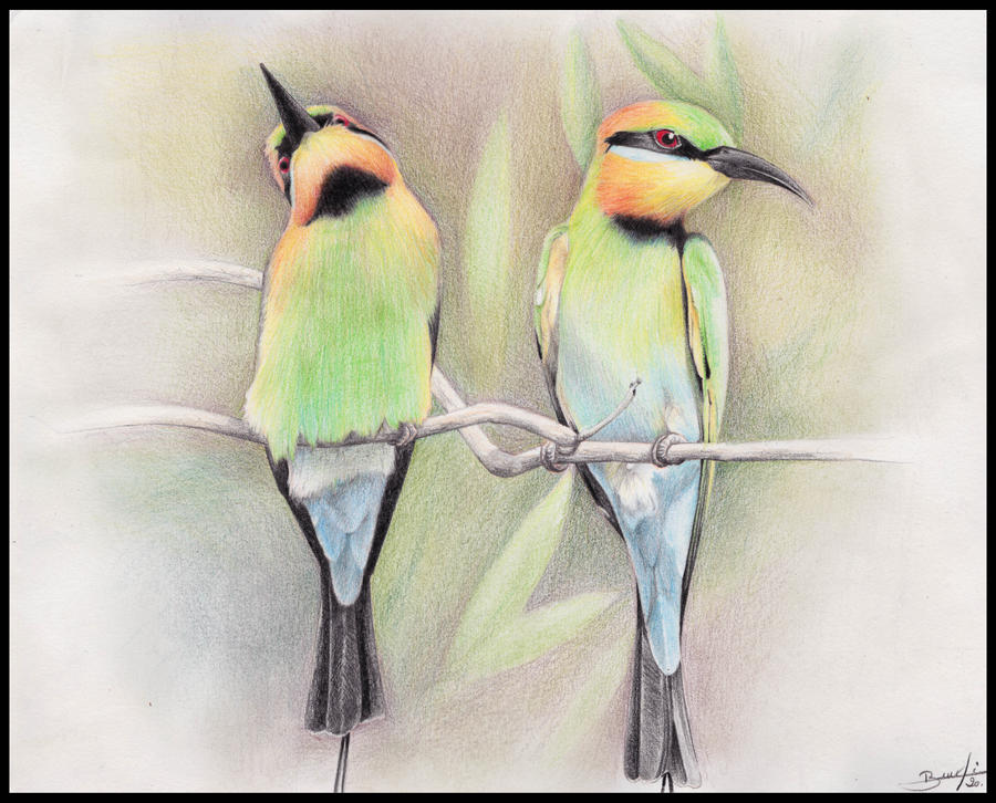 Rainbow bee-eaters - commission