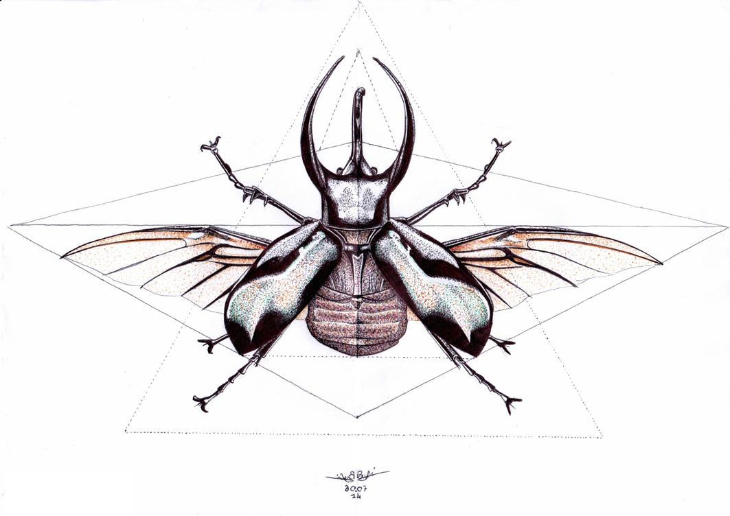 Rhino beetle by be-a-sin