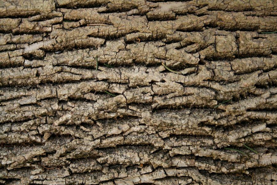 Tree Bark 5 by vSt0ck