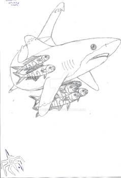 An Oceanic Whitetip Shark