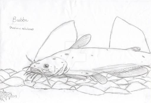 Bubba (Ameiurus nebulosus)