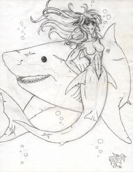Wondrous White Sharks